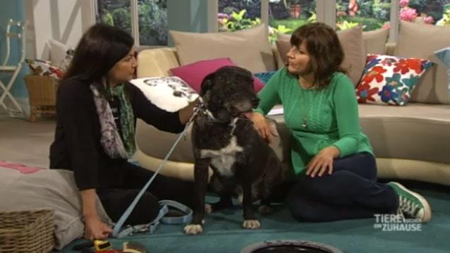 WDR Fernsehen - Tiere suchen ein Zuhause